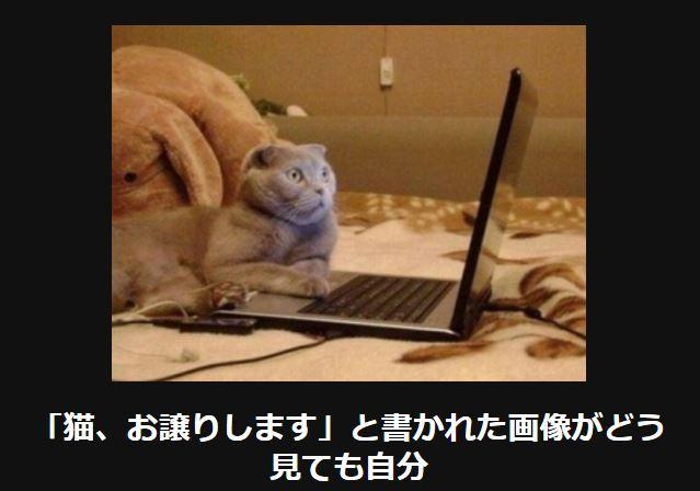 【腹筋ねじ切れた】笑って癒される猫の大喜利14選 | CuRAZY [クレイジー]