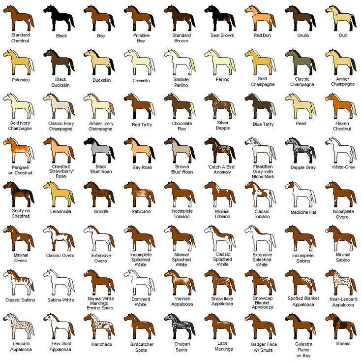 All the possible coat colors of a horse!