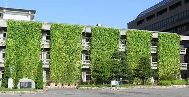 Tende vegetali per balconi e finestre per nascondere paesaggi squallidi. Come costruire una tenda vegetale con piante rampicanti.