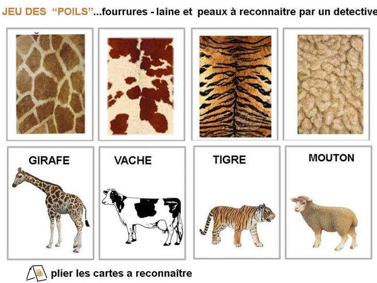 pelages des animaux                                                                                                                                                                                 Plus