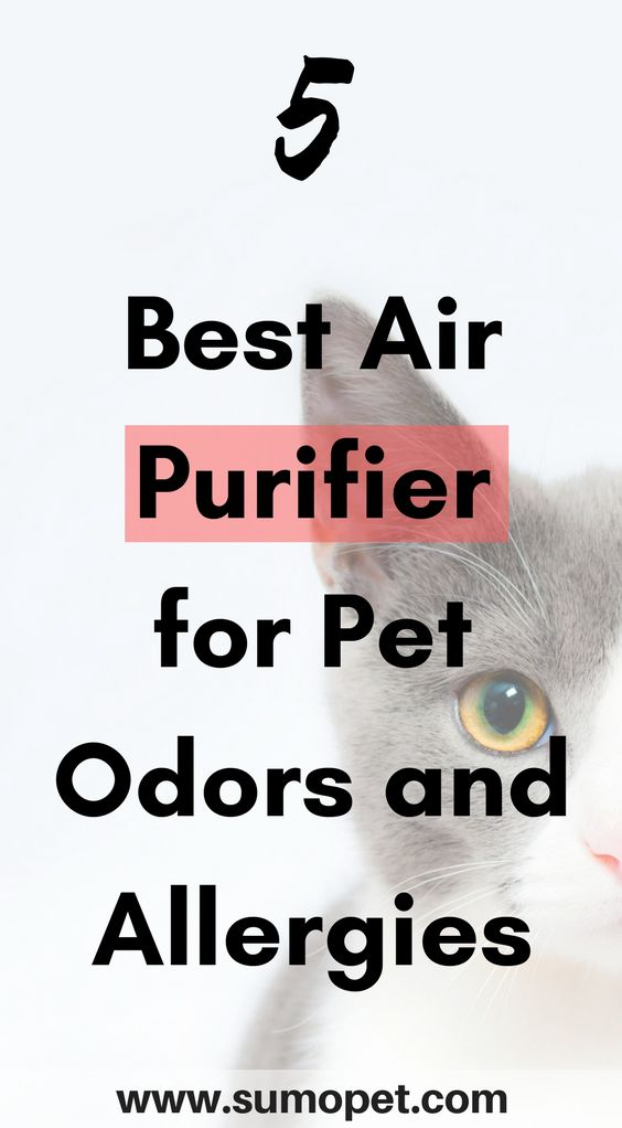 5 Best air purifier for pet odors and allergies. If you're looking for a new air purifier, take a look at my top 5 list!  https://sumopet.com/pets/best-air-purifier-for-pets-odors-allergies/