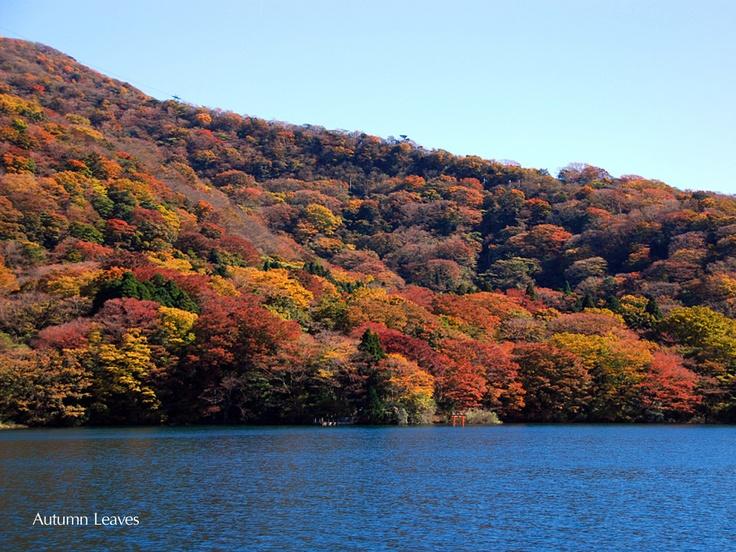 Autamn leaves