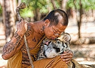 Buddhism, tattoos and tigers