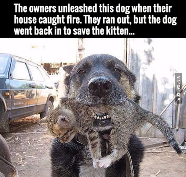 The family dog was let loose during a fire and it went back to save the kitten still inside. ---- Not all heroes wear capes
