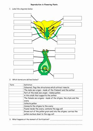 50 Plant Reproduction Worksheet Answers in 2020 (With ...