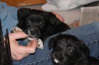 Yogi Bear - Border Collie pet adoption in Scranton PA #dogadoption