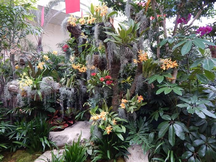 17 best images about flower festivals home garden shows - Orchid show missouri botanical garden ...