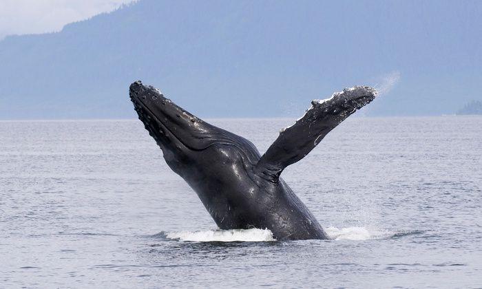 Whale-Watching Cruise - Marina Del Rey Sportfishing | Groupon