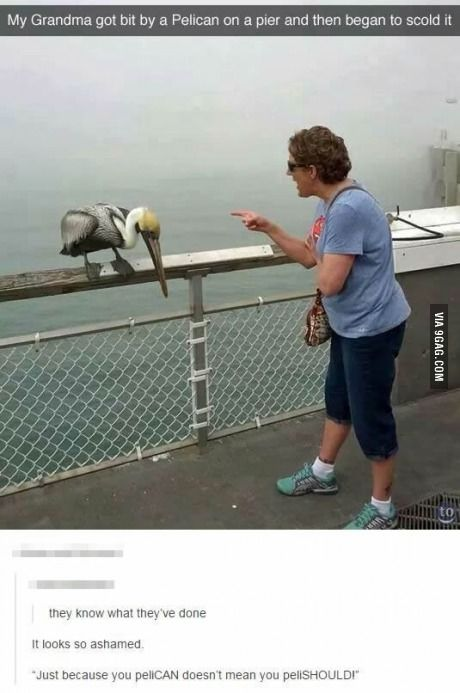 """""""Just because peliCAN doesn't mean peliSHOULD!!!!!"""""""