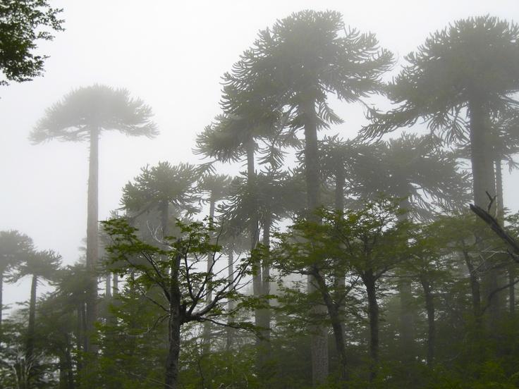 Villarrica National Park, Lake District, Chile