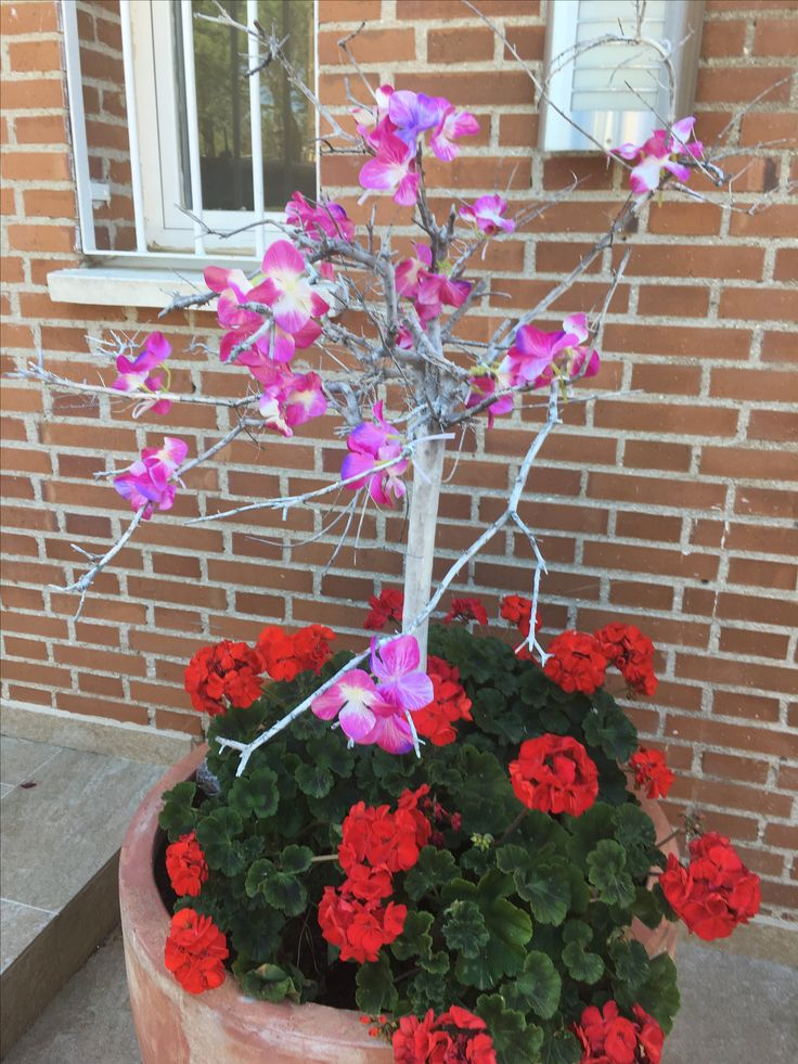 Arbol estacional, season tree, primavera, spring