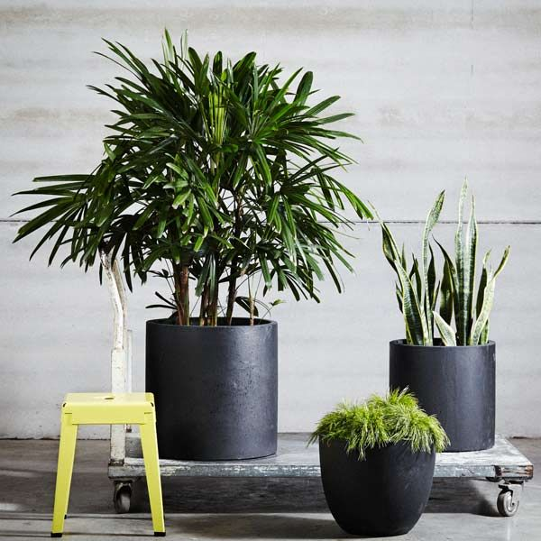 38 best pots planters images on pinterest landscaping plant black pots against the grey looks great will tie in your windows to the scheme workwithnaturefo