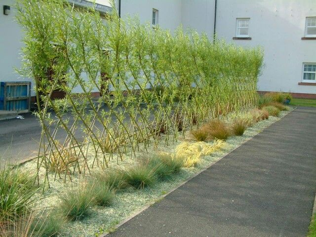 13 best living fences images on pinterest living fence fence and