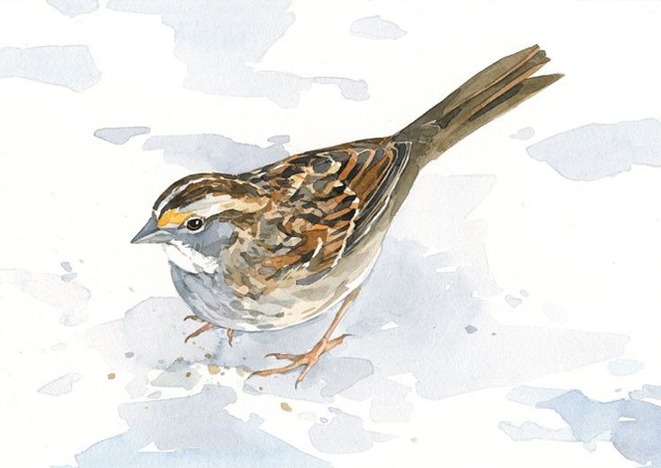 Sparrow art print bird watercolor painting by studiotuesday