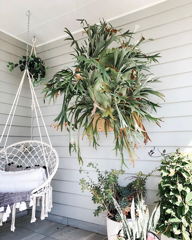 10 House Plants Which Are Hard To Kill Activity Room