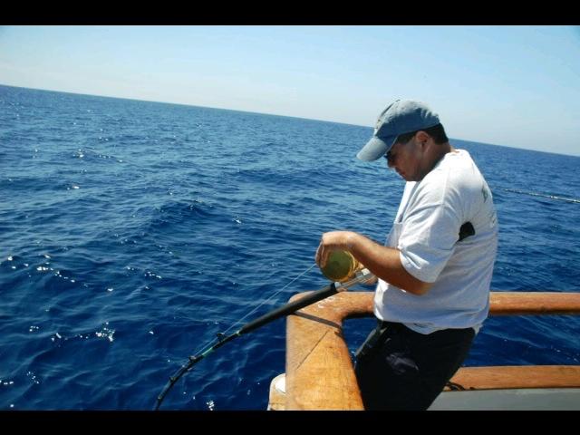 16 best long range fishing images on pinterest fishing for Guadalupe island fishing