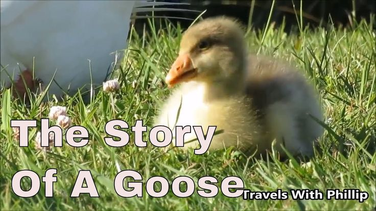 The Story Of A Goose | Zero project music, Moon Waltz