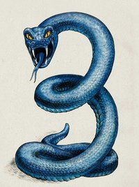 Dipsas (Beast)(Tiny) – Attorcroppes love their serpent pets, and the tiny Dipsas with their bizarre poison are their favorites. The poison of these blue vipers turns their victims smaller, eventually the victim becomes so tiny they become easy snacks for even the tiny Dipsas themselves. There is no antidote, the poison will wear off after some hours if you survive being so tiny. (Medieval)