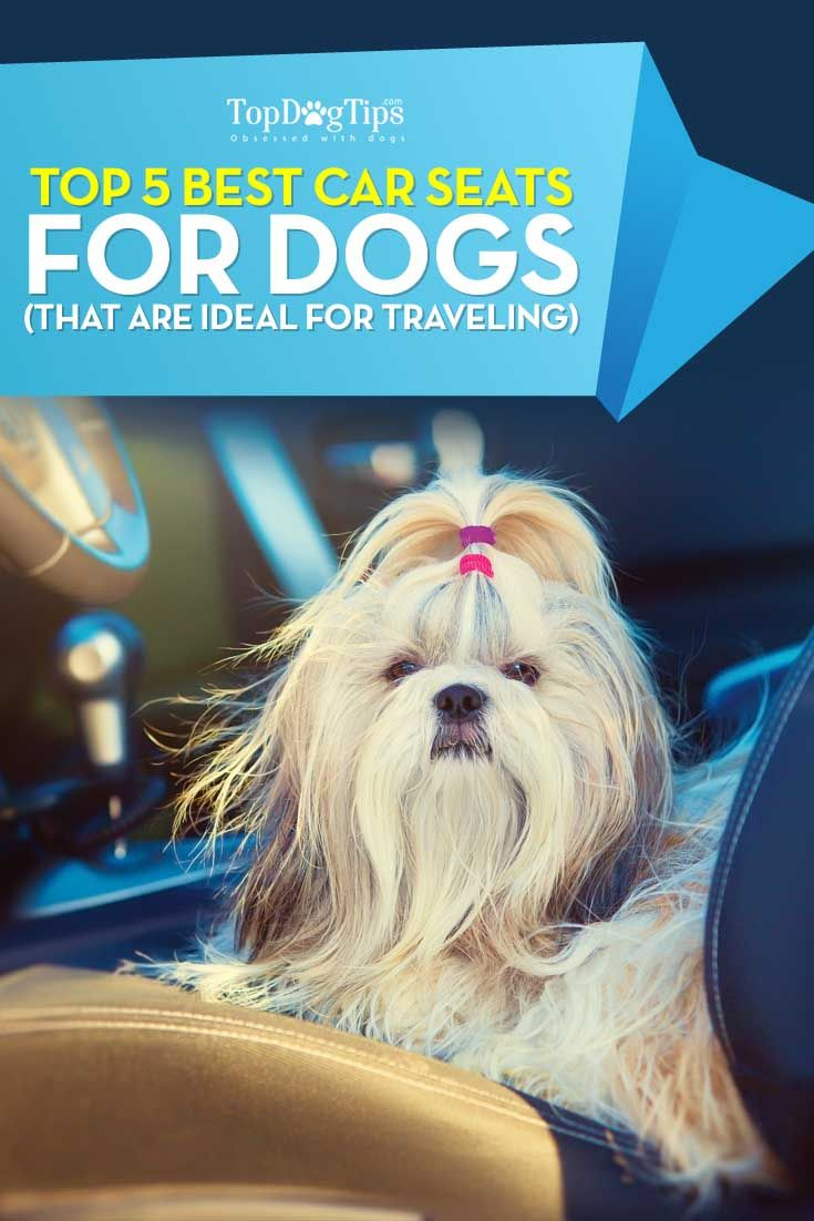 2016Best Car Seats for Dogs for Travel: Ultimate Top 5 List. Safety, first and foremost. Pet owners who like to travel with their dogs by car, even if it's simply to a local grocery store to grab a few things for dinner, should take a look at some of the best car seats for dogs and pick the next throne for their pooch. The reason you absolutely must use dog car seats is the same as why you would use child seats in the car – protection. #dogs #travel #cars