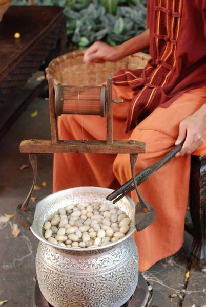 Silkworms...Spinning Silk - Thailand