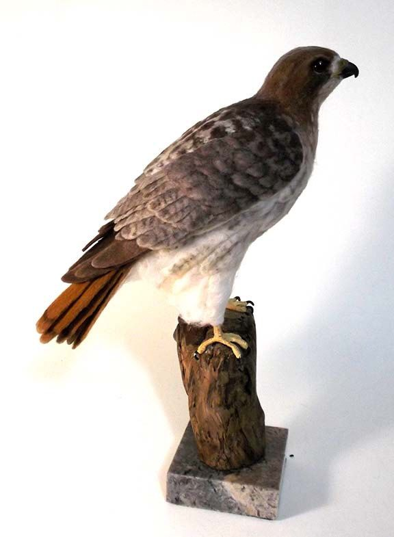 Pale Male Red-Tailed Hawk by Flightofheart on Etsy https://www.etsy.com/listing/279125830/pale-male-red-tailed-hawk