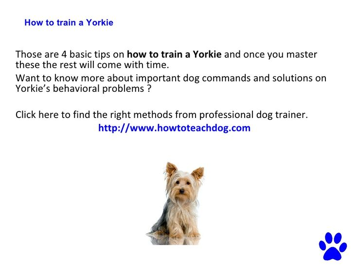 how to train a yorkie to be quiet