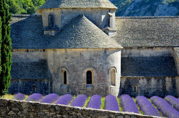 Lavender, Abbazia di Senanque (Gordes) , Regione di Luberon , Provenza