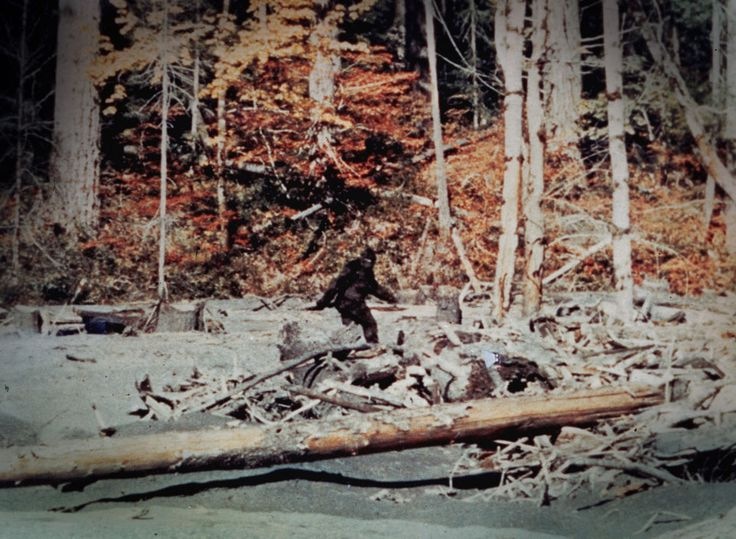 Is Bigfoot real? Famous Bigfoot Sightings: The first reported sighting of Bigfoot, or Sasquatch came in 1811 in Alberta, near what is now the town of Jasper. Matching the description found in many Native American legends, the creature was described as a towering, hairy beast that stalked the great Canadian forest.