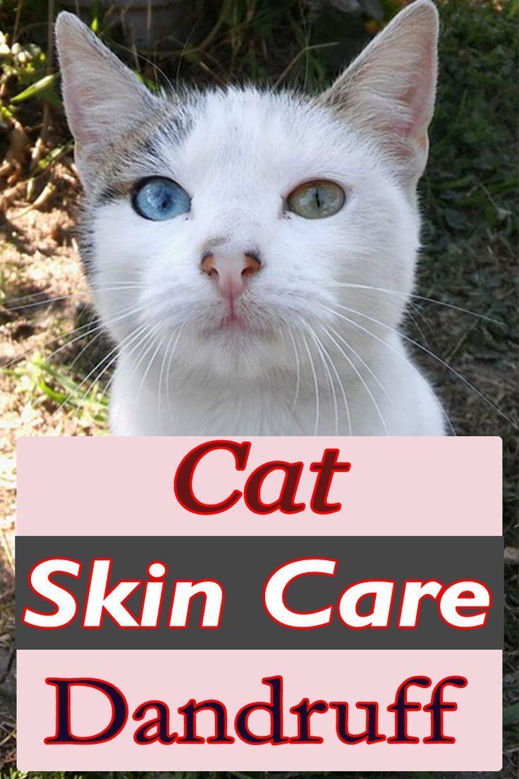 Cat Skin Care Dandruff Cat Skin Problems Cat Skin
