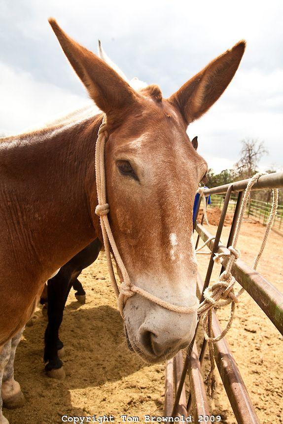 1000+ images about Donkey & Mule photos on Pinterest