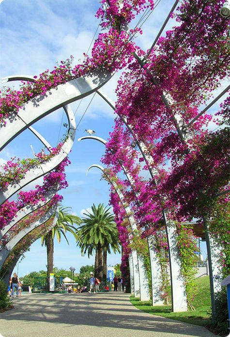 Brisbane, Queensland, AU-  Pinner spent 4 days here this past spring. The city was a modern metropolitan city with lovely walkways and botanical gardens along the riverway that feeds the city! Oh my goodness, I would love to go to Australia!!
