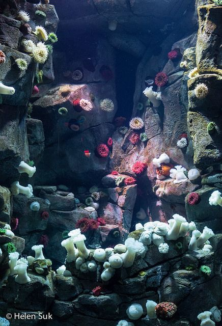 Ripley's Aquarium of Canada: Tips for your visit to Toronto's newest and hottest attraction, including advice for when to go and suggestions for photography.