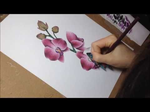 �drawing orchids with colored pencils and watercolor