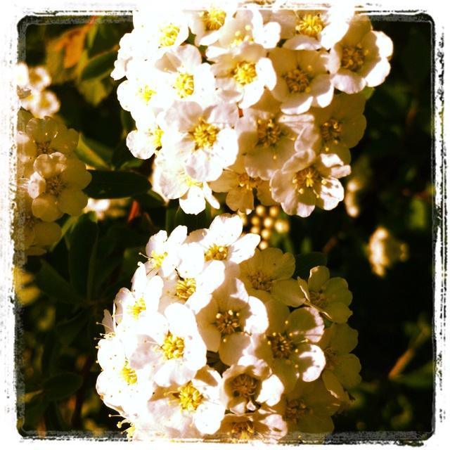 May Garden -- Day 15