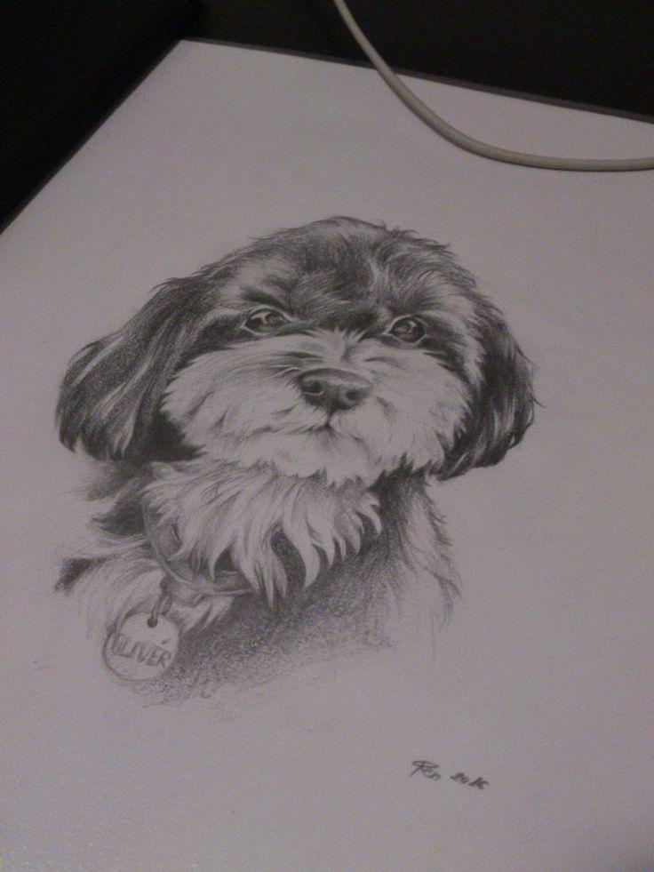Dog by DarwiO