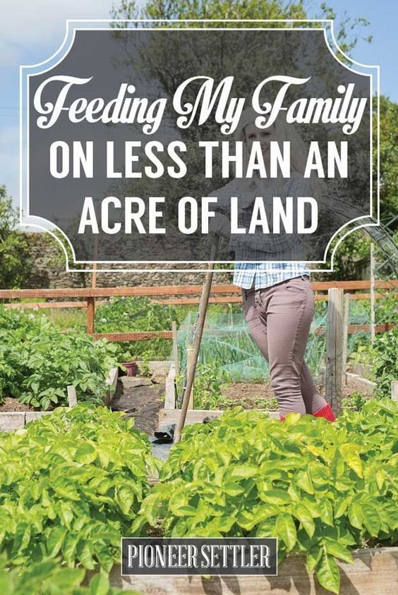 Feeding My Family On Less Than an Acre of Land | Self- Sufficiency And Homesteading Tips And Tricks by Pioneer Settler at http://pioneersettler.com/feeding-family-less-acre-land/