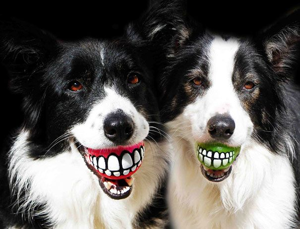 Funny Fetch Ball Gives Your Dog a Hilarious Grin | Bored Panda