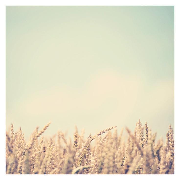 wheat field photo print - whimsical fine art nature photography, grain, summer, gold, green, mint - 8x8