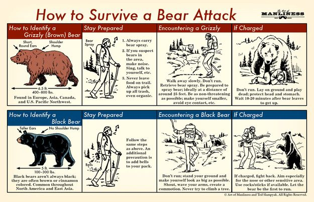 "How to survive a bear attack. | Community Post: 36 Essential ""Manly"" Life Hacks That Every Person Should Know"