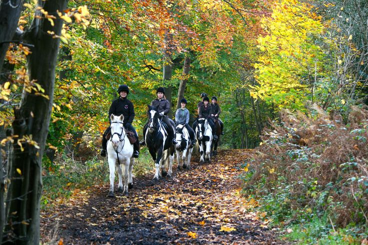 Hacking in our Woods is always such fun :)