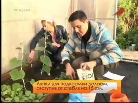 Огурцы.Марина Рыкалина и Виталий Декабрев.История одной культуры.