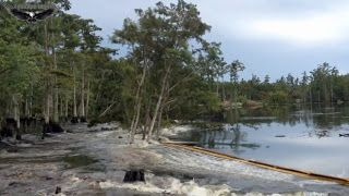 Καταβόθρα Καταπίνει ολόκληρα Δέντρα στη Λουιζιάνα   Τσόκαρο blog