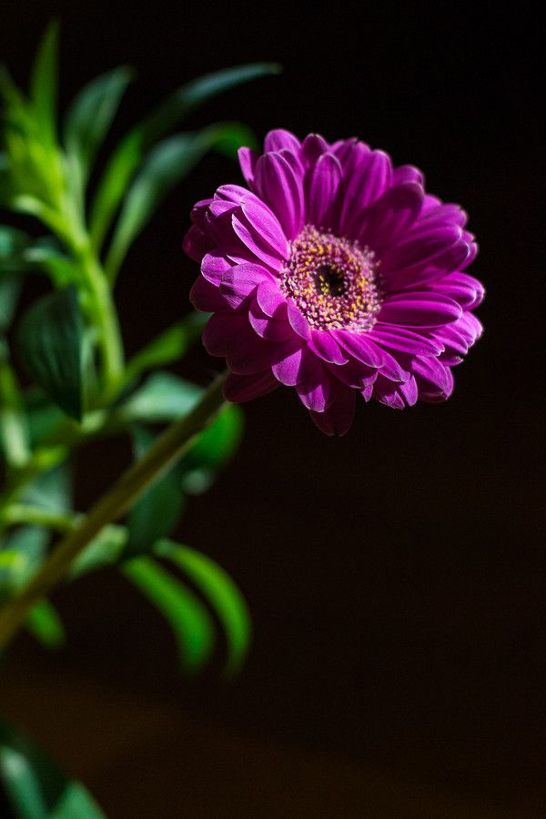Flower by Marin Mitrica on 500px