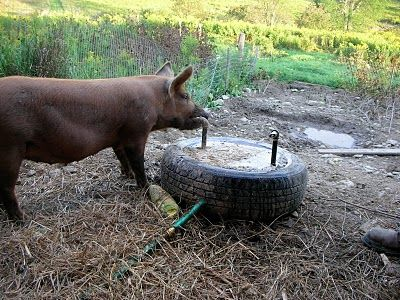 I love this idea for watering the pigs.