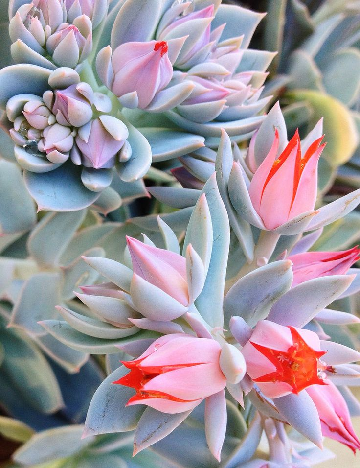 419 Best Images About Cacti And Succulents On Pinterest
