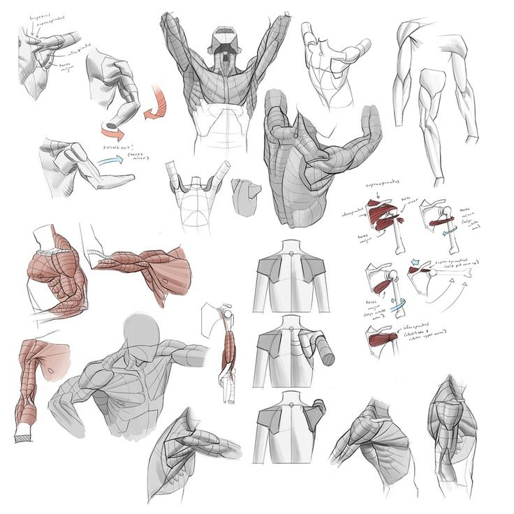 Drawing Arm Lifts : An okay fuck ton of simple shoulder movement references