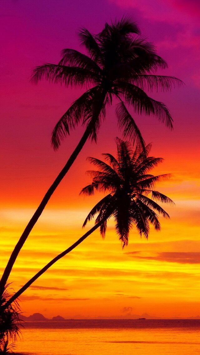 Palm trees at a beautiful sunset. iOS8 HD wallpaper for