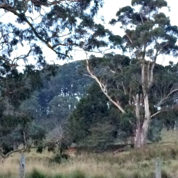 Luxurious stay at Daisy Cottage Wildes Meadow Southern Highlands - Southern Highlands Digest