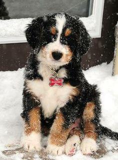 Soooo cute! I want a Bermy!