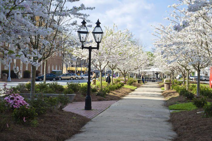 The Most Beautiful Cherry Blossom Festival In Georgia You Won T Want To Miss Cherry Blossom Festival Festivals In Georgia Cherry Blossom